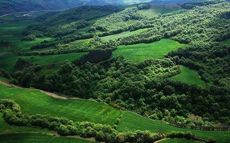 جنگل نقله بر رودبار