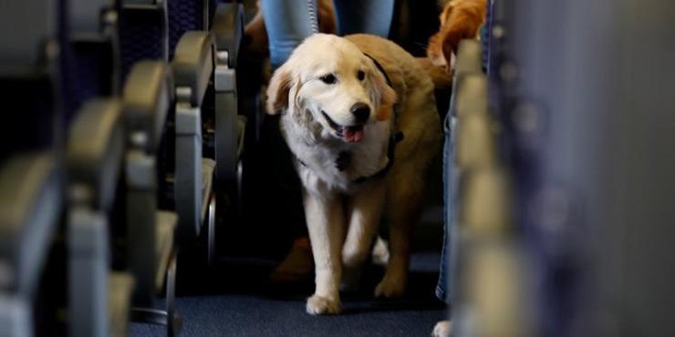 سفر با حیوانات خانگی