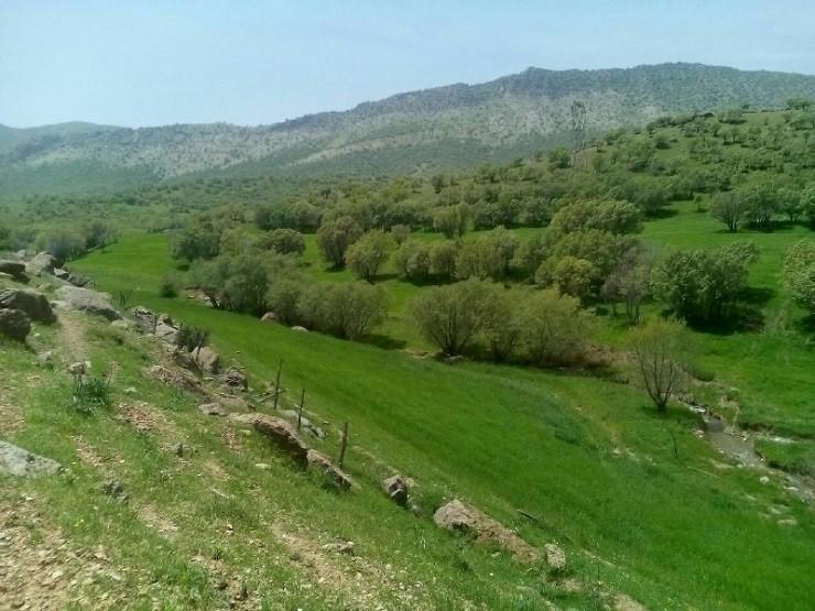 روستای چمنار