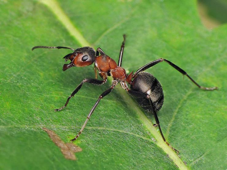 Despite its name, there are actually no ants in Antarctica