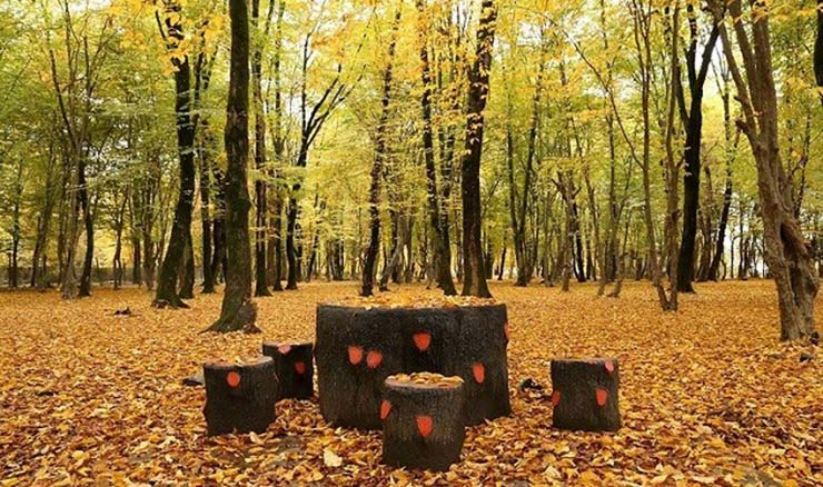 جنگل قرق