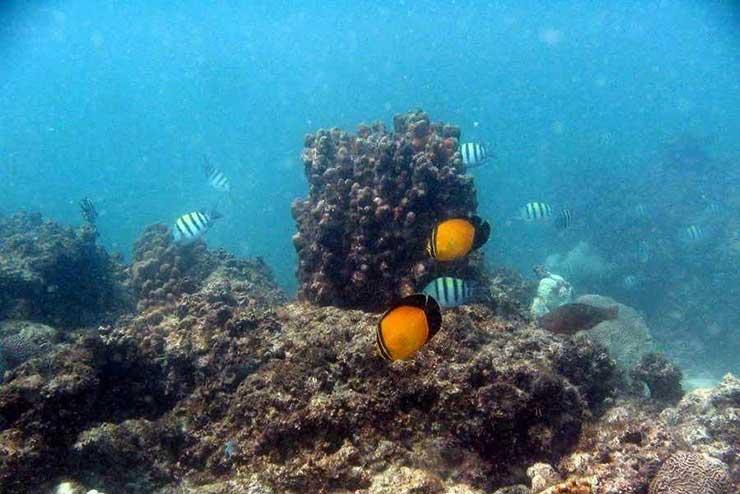 ماهیان دریایی